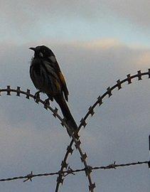 תמונה של ציפור על חוטי תיל